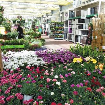 La météo grippe le marché de la jardinerie