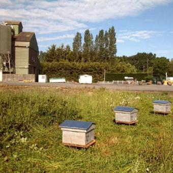 Biodiversité : Des ruches près de nos magasins