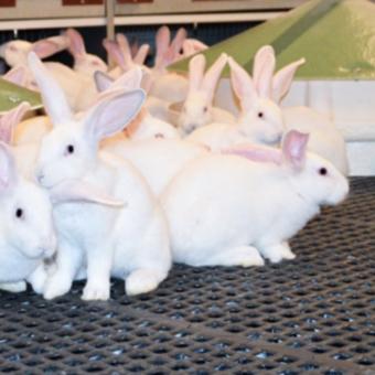Bien-être animal : le lapin fait un bond